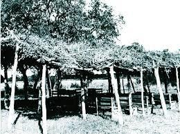 BUSHHARBOR
